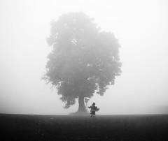 all on a misty morning (matthewheptinstall) Tags: mist fog tree country countryside walk field uk england wakefield painthorpe littlegirl scale haze morninglight childhood freedom