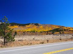 Kenosha Pass Aspens (mount_evans) Tags: olympus omd em5 microfourthirds existinglight mzuiko1250mmf3563 kenoshapass colorado outdoor aspens autumn