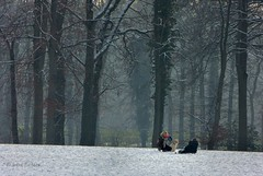 A photo of taking a photo (joeke pieters) Tags: family trees dog snow nature bomen sneeuw familie hond snowscape sledge slee platinumheartaward mygearandme mygearandmepremium mygearandmebronze panasonicdmcfz150 1040331
