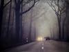 definition of mist (silviaON) Tags: road street trees mist car fog forest december ie textured 2012 bsactions artistictreasurechest skeletalmess magicunicornverybest florabellatextures magicunicornmasterpiece alledgesactions