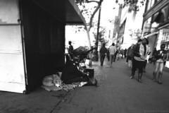 Homeless Holidays (Eric Molyneaux) Tags: life sanfrancisco christmas street blackandwhite dog pet holidays downtown candid homeless poor santahat struggling