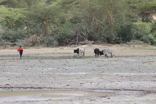 Warthogs in Ngorongoro Crater (2)