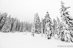 The Meadow (Mark Griffith) Tags: camping winter bw snow washington backpacking snowshoeing alpental snowcamping snoqualmiepass wintercamping overnighter mtbakersnoqualmieforest 20121222dsc6730