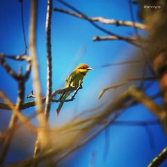 นกน้อย ป่าก็น้อย คนก็น้อย..นักที่จะรักษาไว้~•