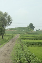 Agricultural Workers near Kumya North Korea (Ray Cunningham) Tags: road rice north korea dirt dprk coreadelnorte 조선민주주의인민공화국 kumya 금야군 корейскаянароднодемократическаяреспублика northkoreanphotography raycunninghamnorthkoreanphotography dprkphotography koreainépidemokratikusköztársaság