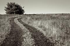 wrong way, red clay (stillshunter) Tags: road morning blackandwhite bw tree monochrome grass landscape morninglight blackwhite bush path australia grasses leading