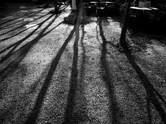 Long Shadows (pilechko) Tags: winter shadow blackandwhite sunlight monochrome hamilton nj mercercounty groundsforsculpture