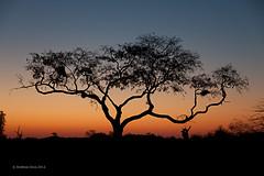 Sunset (Andibart) Tags: sonnenuntergang scenic botswana 2012 mashatu lnder