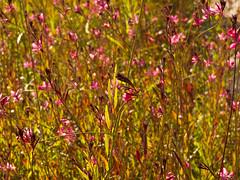Backlight flowering plants. Street in Belek. (George Ino) Tags: flowers sun backlight zon tegenlicht belek