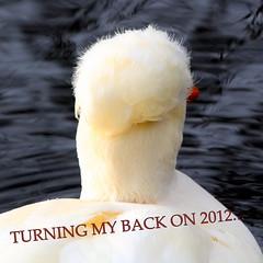 See You All In 2013! (Ger Bosma) Tags: cute animal animals fun duck funny humorous joke humor ducks humour newyearseve comical lump 2012 oudejaarsavond 2013 img70329