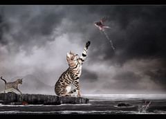 Kitties... (Takis Poseidon (RL busy...)) Tags: sea cats lake mountains water photomanipulation photoshop wings starfish surrealism surreal kitties fishes photomanipulate