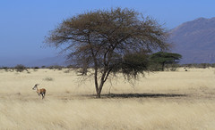Awash National Park (Ingeborg van Leeuwen) Tags: ethiopia awash
