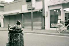 fukagawa pigeon (SOVA5) Tags: street blackandwhite film pigeon fukagawa ilfordxp2super400 minoltaals rokkorqf40mmf18