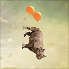 she did not think this one through (Janine Graf) Tags: travel balloons rhino artrage whiterhinoceros baddecisions juxtaposer sandiegowildsafaripark janine1968 iphone4s janinegraf squaready moderngrunge giraffesarepranksters eddieredmaynedoesnotreturnmycalls