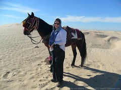 Douz Tunisia Jan 2013 066 (Matthew and Heather) Tags: horse sahara desert tunisia douz