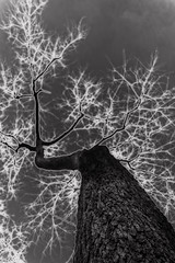 nature is electric (lucymagoo_images) Tags: bw white tree art nature monochrome electric photoshop effects experimental glow sony bark electricity static electrical orton currents charged braches rx100 ortonized lucymagoo lucymagooimages
