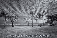 Timucaun Plantation in IR (Michael Pancier Photography) Tags: bw nature birds ir us blackwhite unitedstates florida beaches infrared jacksonville fernandinabeach fineartphotography northflorida ameliaisland travelphotography commercialphotography naturephotographer michaelpancier michaelpancierphotography floridastateparks avianphotography floridaphotography landscapephotographer fineartphotographer michaelapancier wwwmichaelpancierphotographycom