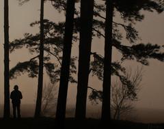 # 4:  Atravesar la niebla... (nanettesol) Tags: trees winter portrait fog bosque invierno pinos freddo niebla frio siluetas niebba