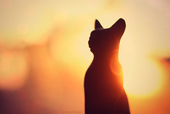 the cat goddess (gypsymare) Tags: morning sun sunlight statue cat dawn feline glow goddess lensflare egyptian bastet thelittledoglaughed gypsymarestudios jennifermacneilltraylor jmacneilltraylor