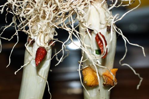 del mundo vegetal
