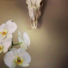 (irasum) Tags: orchid orchids juxtaposition scull georgiaokeeffe