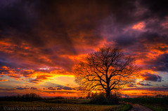 Winter tree (mlphoto) Tags: trees light sunset sky cloud dog sun sunlight house color tree industry nature colors field grass silhouette clouds germany way landscape deutschland licht raw sonnenuntergang dof sundown pentax bokeh natur feld himmel wolke wolken sigma spotlight explore hund gras sunrays landschaft sonne farbe bume sonnenaufgang industrie baum hdr sonnenstrahlen sunbeams feldweg weg k5 lightroom sonnenschein leverkusen sonnenlicht sigma2470 photomatix lr4 mlphoto pentaxk5 lightroom4 mlphoto markuslandsmannzenfoliocom markuslandsmann mlandsmann vigilantphotographersunite vpu2