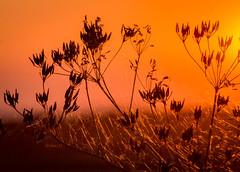 Sonnenuntergang - Sunset (achim-51) Tags: sonnenuntergang sunset outdoor dmmerung pflanze lumixgvario45200f4056 panasonic lumix dmcg5