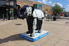 56b - Herd Of Sheffield - Skywalker (Slimboy Fat) Tags: elephant herdofsheffield sheffieldchildrenshospital skywalker sheffield england unitedkingdom gb