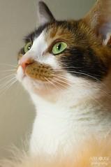 Daisy My First Cat Model. (Abbi Louise Photography) Tags: cutecats kitty whiskers nikon1855mm nikon dslr d3200 animalphotography petphotography pets greeneyes catseyes cats cat