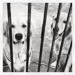 Arrested for stealing hearts Also charged with excessive cuteness. (nanceejoo) Tags: instagramapp square squareformat iphoneography uploaded:by=instagram moon