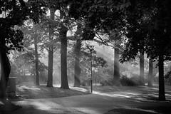 Foggy park (UdePics) Tags: park helsinki kaivopuisto fog blackandwhite outdoor tree empty
