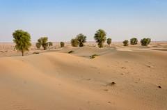 Grove in the desert (Tiigra) Tags: dubai unitedarabemirates ae 2013 color landscape nature plant texture tree