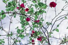 Botanical Series10 (Elena Picart) Tags: elenapavlova floralartprint interiors modern minimal flowerphotographs floralart botanicalprint flowerphotography garden spring decor naturedecor blossoms picargallery