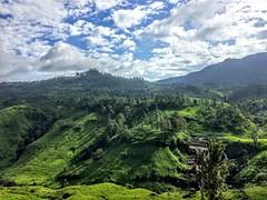 Kandy tea plantations (cattan2011) Tags: mountains mountainscape naturephotography nature mandy srilanka travel travelblogger traveltuesday landscapephotography landscape