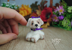 matilda07 (Zhanna Zolotina) Tags: teddy bear ooak dog miniature handmade blythe barbie tinydolhousetoyzz toyzz altair dollhouse puppenhaus
