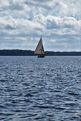 Sailing Log Canoe Races - Bartlett Cup 2016 (Chesapeake Bay Maritime Museum Photos) Tags: cbmm log canoe sailing races bufflehead island bird jay dee miles river st michaels maryland chesapeake bay maritime museum history extreme