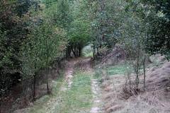 IMG_7072-2 (nicole.schmidtova) Tags: photography czechrepublic canon canon60d czech countryside nature simply autumn fall