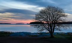 Dark Tree (Peter Vestin) Tags: nikond7000 sigma1750mmf28exdcoshsm siruin3204x siruik30x adobecreativecloudphotography skutberget karlstad vrmland sweden vnern nature landscape seascape sunset tree