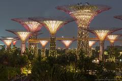 pitalenko-4250.jpg (pitalenko) Tags: city night singapore laser singapur singapure arhitech