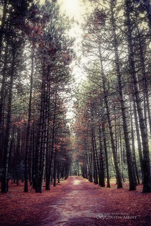 The Avenue [Explored December 11th, 2012]