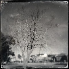 Heres that tree I love too post but now i used a different combo oh yea (ZNash_) Tags: sky blackandwhite nature beautiful clouds landscape photography cloudy flags noflash bnw iphoneography iphoneonly hipstamatic iphone4s tinto1848lens dtypeplatefilm