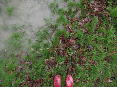 DSCF1652 (MustLoveCartoons) Tags: uk autumn nature wet water leaves rain outdoors flood wellingtonboots wellies autumnal wellingtons flooded wellyboots