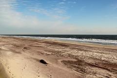 Smith Point Beach Dec 2012 (Mr.TinDC) Tags: ocean ny newyork beach water li sand longisland atlantic beaches atlanticocean suffolkcounty masticbeach smithpoint smithpointbeach smithpointpark smithpointcountypark