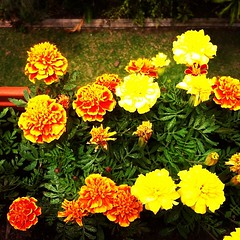 Balcony garden. #fourthfloor (drzax) Tags: fourthfloor uploaded:by=flickstagram instagram:photo=331370999893412462740209