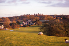 (drfugo) Tags: road trees light sunset england sky grass forest sussex countryside woods dof sheep bokeh farm cottage shift depthoffield fields tilt arax notafake canon5dmkii arsenalvolna3mc80mmf28