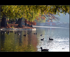One autumn day (bbic) Tags: park autumn light lake leaves landscape nikon day colours ducks lac natura toamna bucharest bbic copaci frunze parculcarol inparc marculescueugendreamsoflightportal