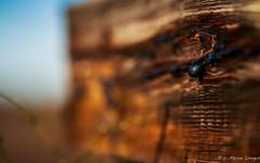 Bead on Winter (c. Melon Images) Tags: wood winter forest canon december dof bokeh nj explore bead tar 2012 pinebarrens coastalplain markiii explored whitesbog canon135l brendanbyrne 5dmarkiii