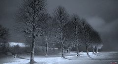 The Last picture with snowy trees this year - Promise... (bent inge) Tags: winter snow norway stavanger norge 2012 rogaland vland vlandskogen bentingeask askphoto