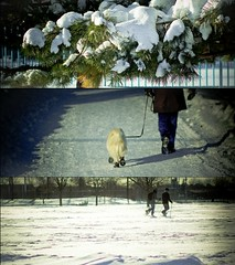 Promenade (bbferrand) Tags: winter chien snow triptych hiver neige triptyque sapin raquettes madameb parcjarry 8x9 canoneos60d holgapreset lightroom4 ©madameb