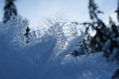 Ice (Canadian Veggie) Tags: snowflake winter snow vancouver snowshoe bc northshore icicle snowshoeing northvancouver seymour dogmountain mountseymour seymourprovincialpark
